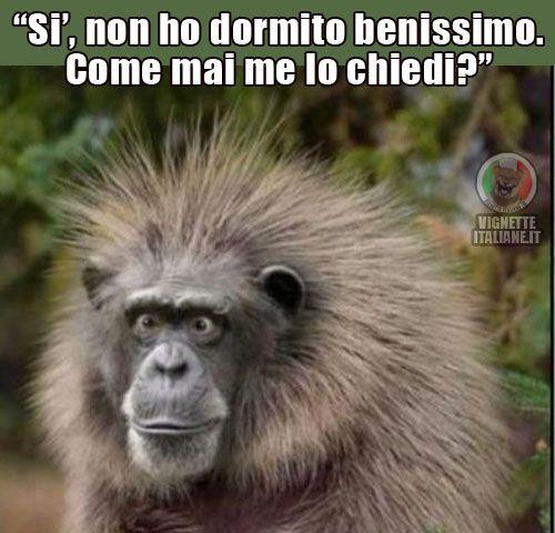 Vignette Italiane Immagini Divertenti Umorismo Ridere Risate Sonno
