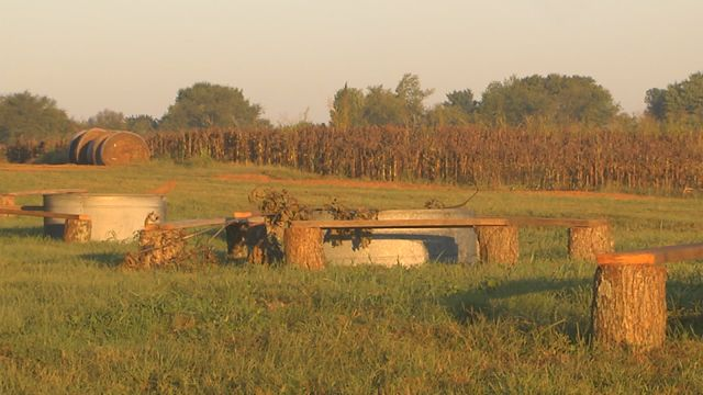 Batey Farms in Murfreesboro will celebrate the fall season with its annual corn maze and pumpkin patch.