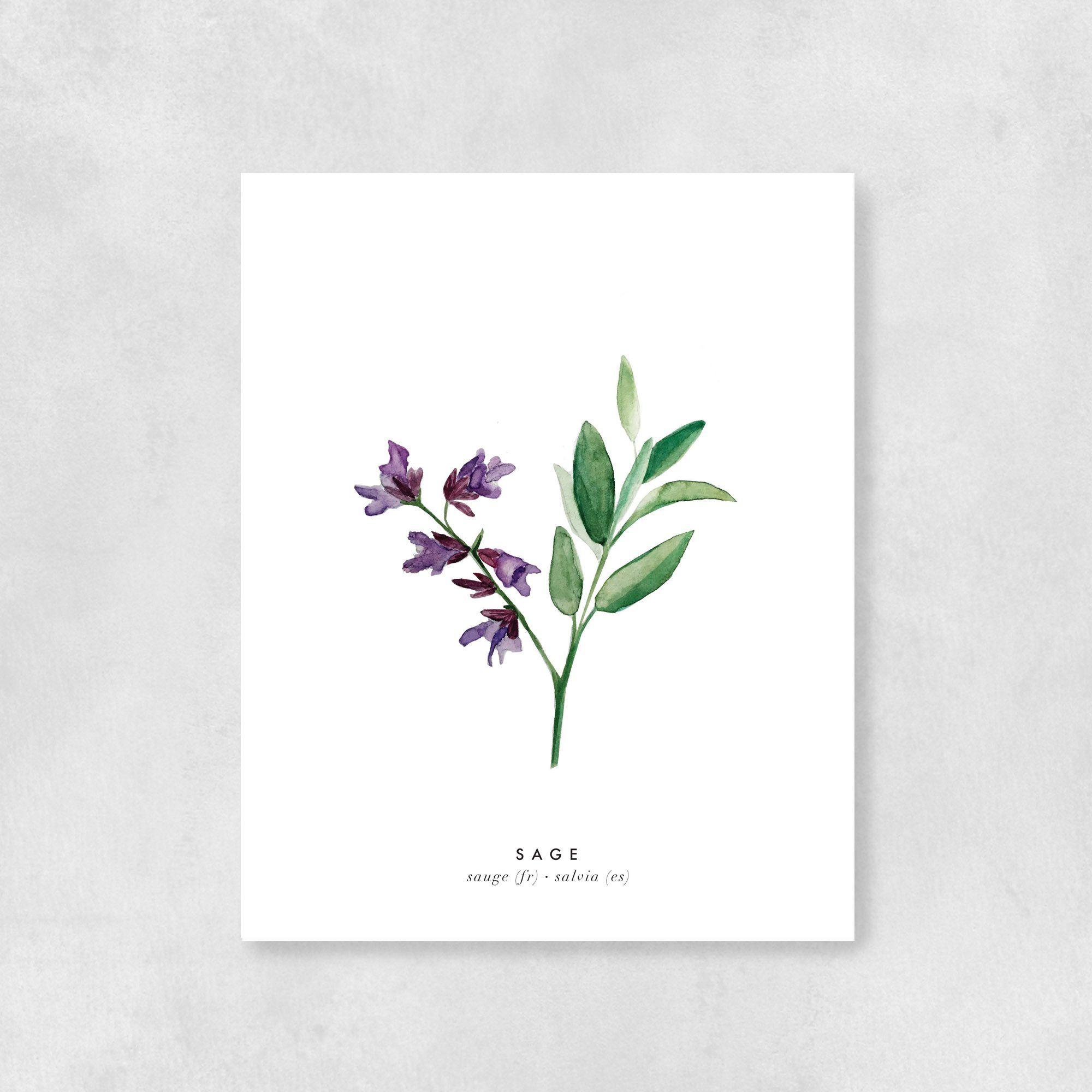 Plant Illustration Botanical Illustration Rosemary Greeting Card with Purple Envelope : Herb Card Herb Art Art Card Herb Drawing
