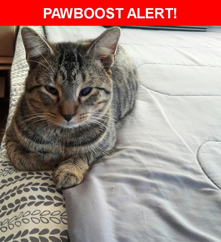 Please spread the word! Winky was last seen in Stilson, GA 30415.    Nearest Address: Near Bl Kendrick Rd & Stilson Leefield Rd