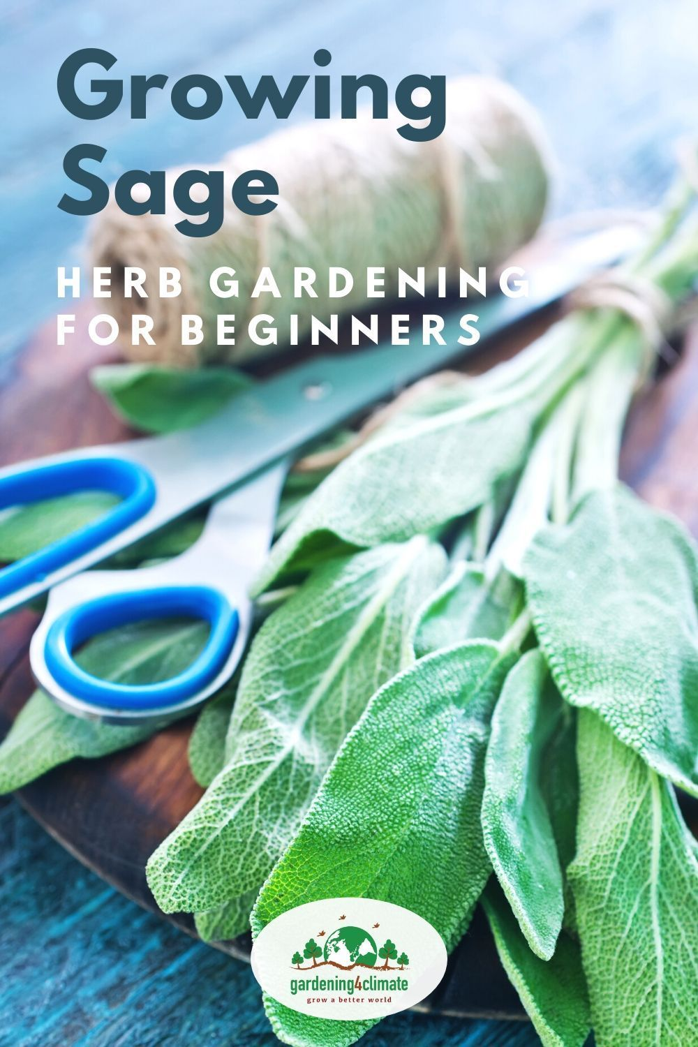 The Sage Plant  How To Grow Sage In Your Culinary Herb Garden is part of Growing sage, Sage plant, Herb garden, Diy herb garden, Healthy garden, Herbs - Everey serious herb gardener needs a Sage Plant! Growing Sage herb is not difficult grow a bush in a container or in your garden and enjoy the delicious leaves!
