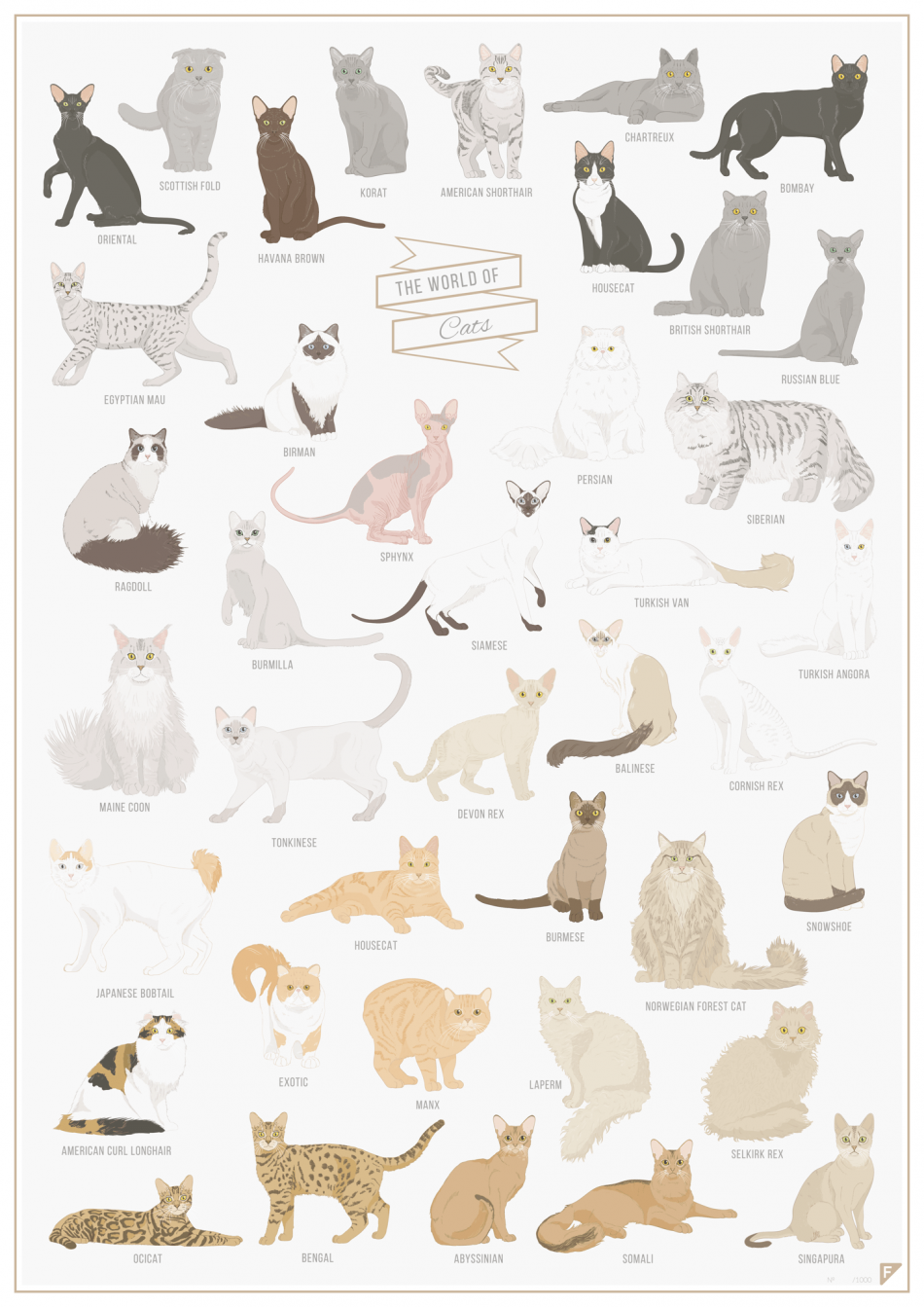 http://bza.co/buy/151675/follygraph/the-world-of-cats