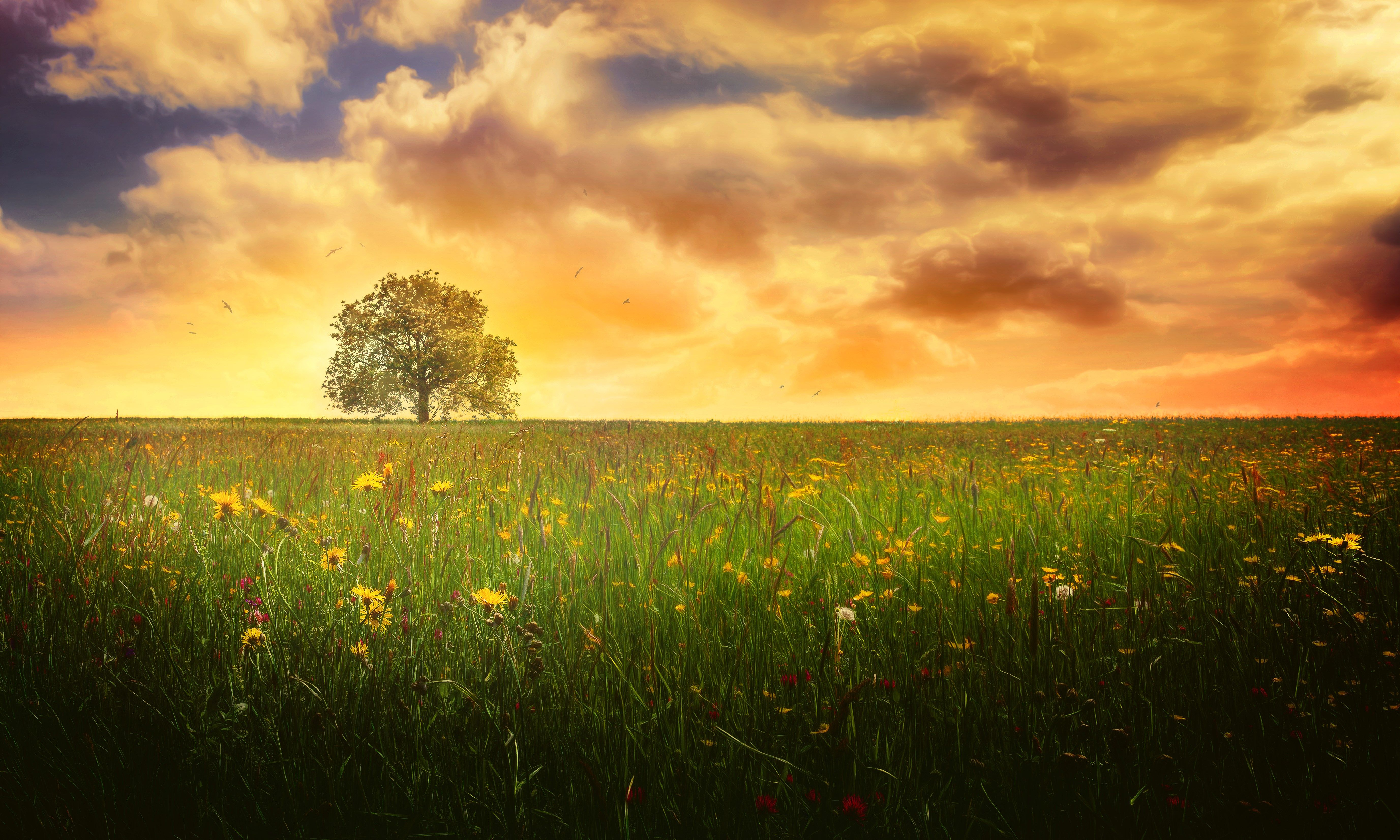 High Resolution Wallpaper Tree Tree Images Stunning Photography Landscape Photography