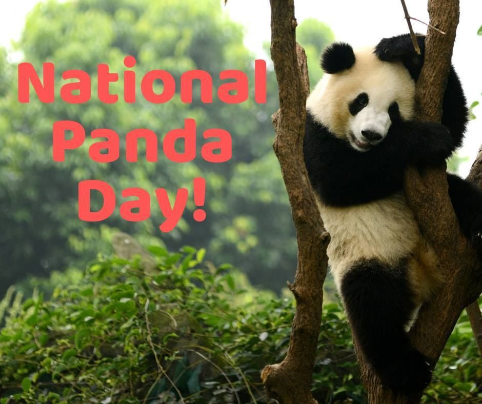 Happy National Panda Day! Today belongs to these adorable ...