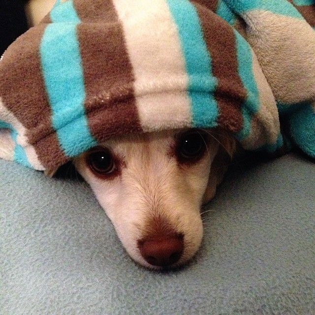 Kiekeboe #rescuedog #pupswithapersonality #dogsofinstagram #myhumanrocks  by pukkieslife