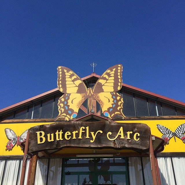 @gallinepadovane ButterflyArc la casa delle farfalle delle Thermae Abano Montegrotto