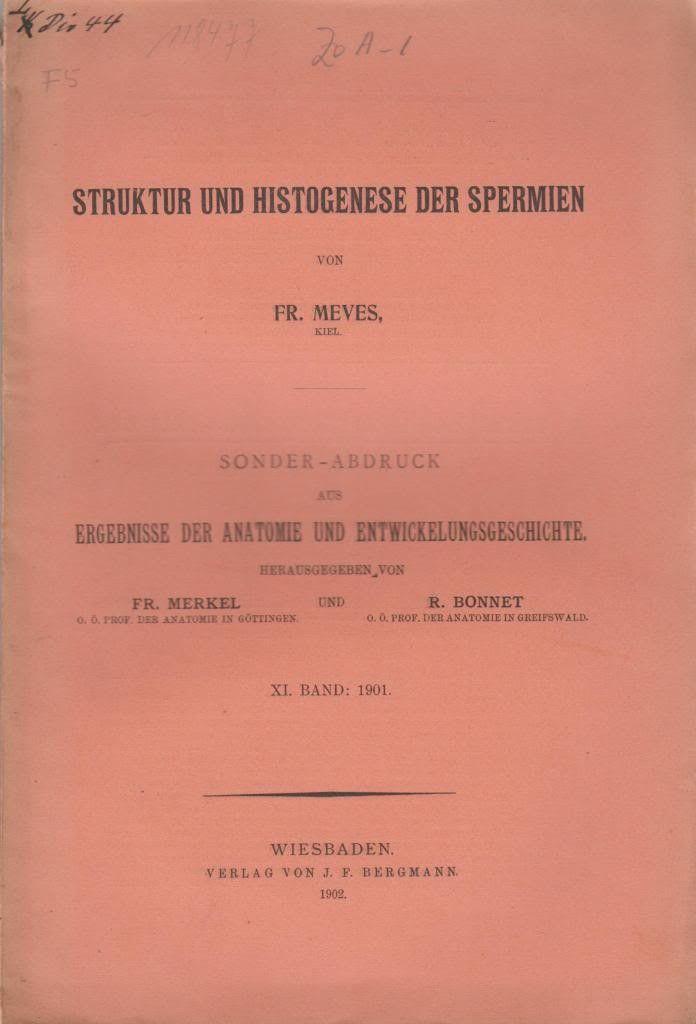 Struktur und Histogenese der Spermien