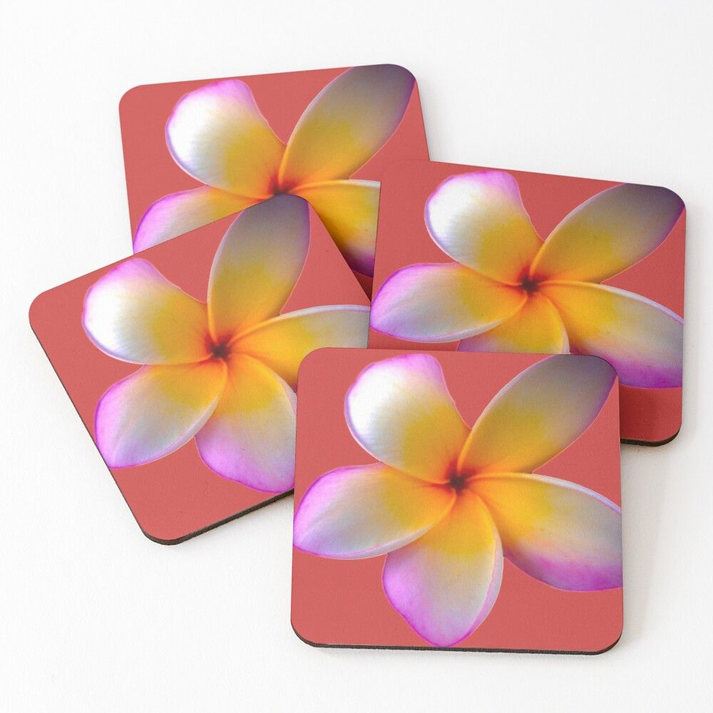'Beautiful white and yellow flower' Coasters by KevinsGiftShop