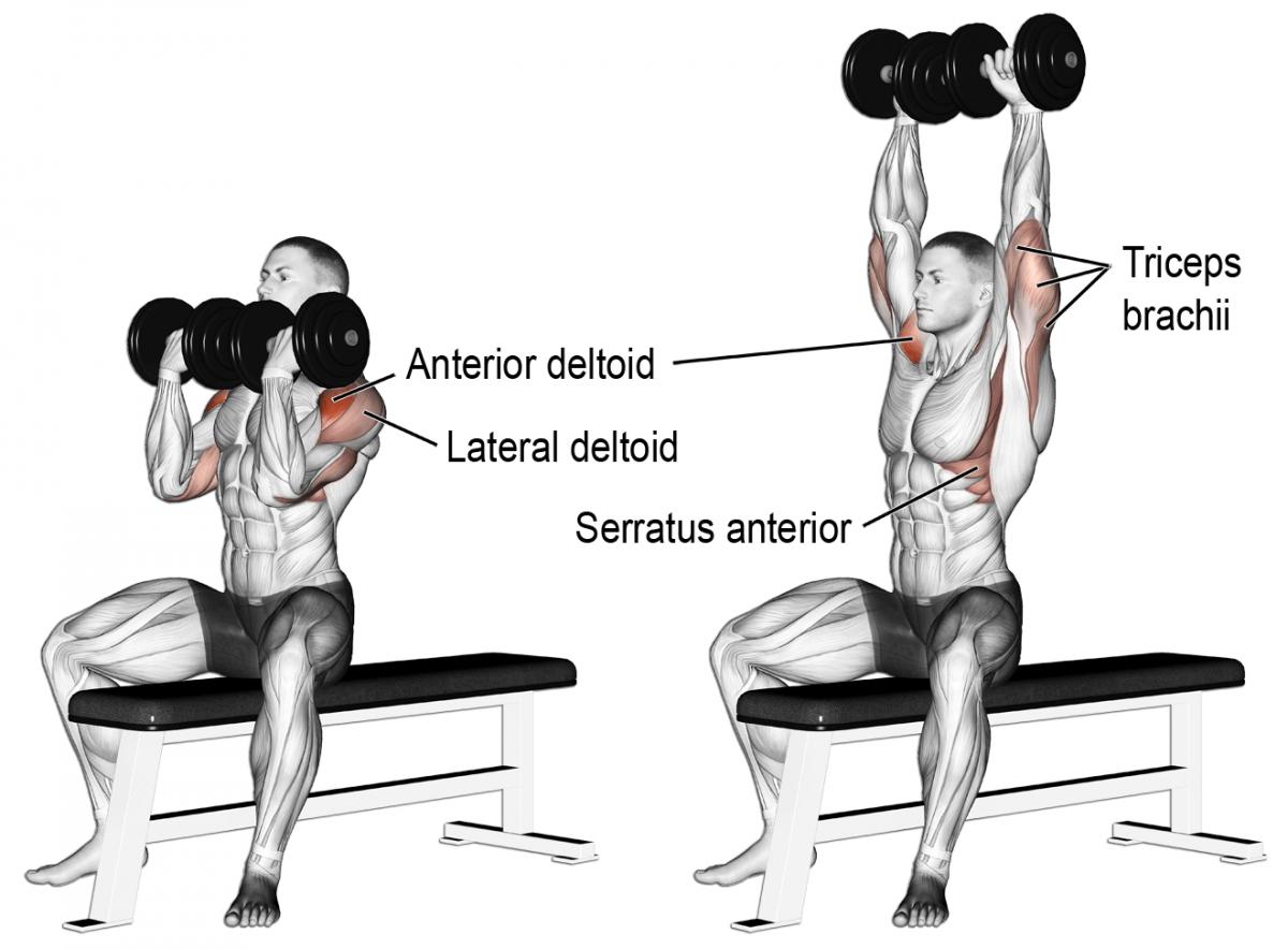 10 Best Muscle Building Shoulder Exercises To Build 3d Shoulders