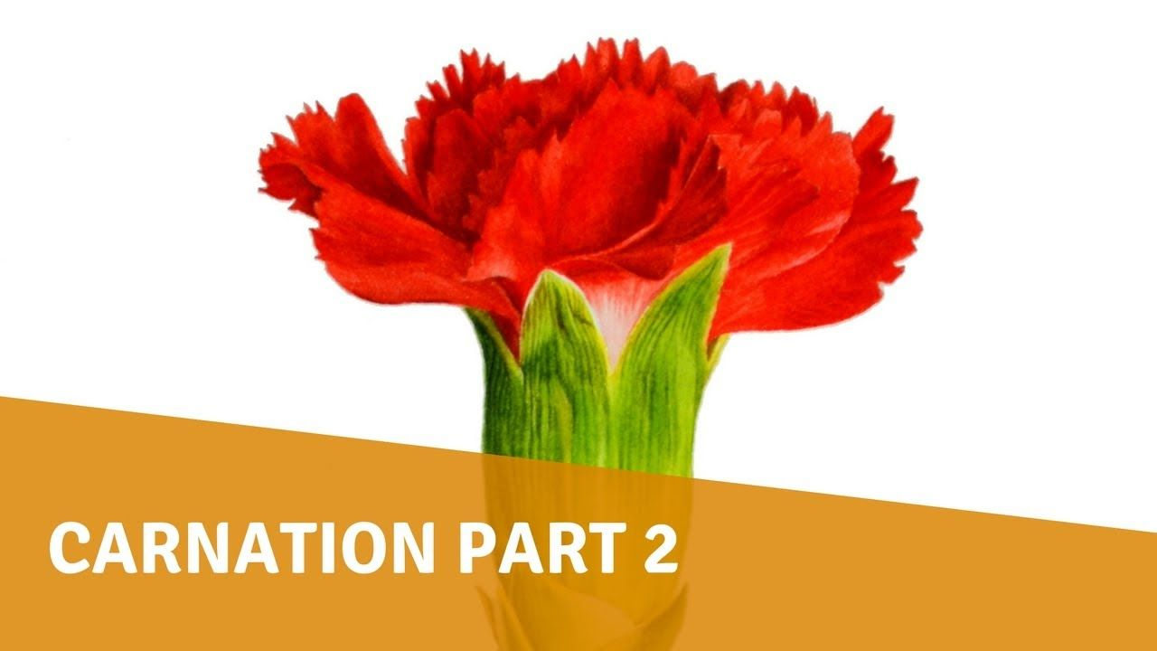 Watercolor Painting Carnation Part 2 Youtube Watercolor Paintings Watercolor Flower Painting