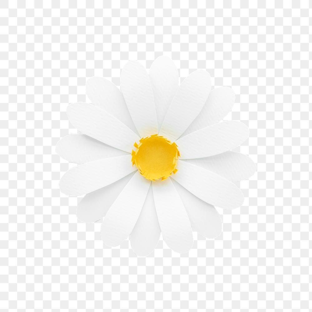 White Daisy Transparent Png Premium Image By Rawpixel Com Nam Paper Daisy Paper Flowers Daisy