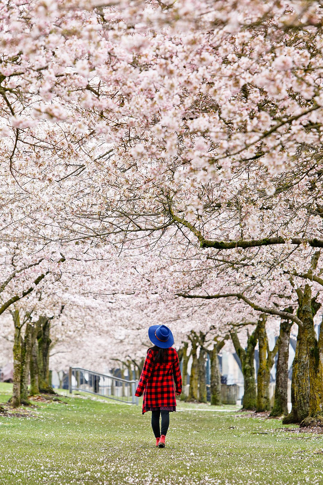 Best Places To See Cherry Blossoms In Portland Oregon Local Adventurer Travel Adventures In Las Vegas World Wide Places To See Portland Travel Oregon Travel