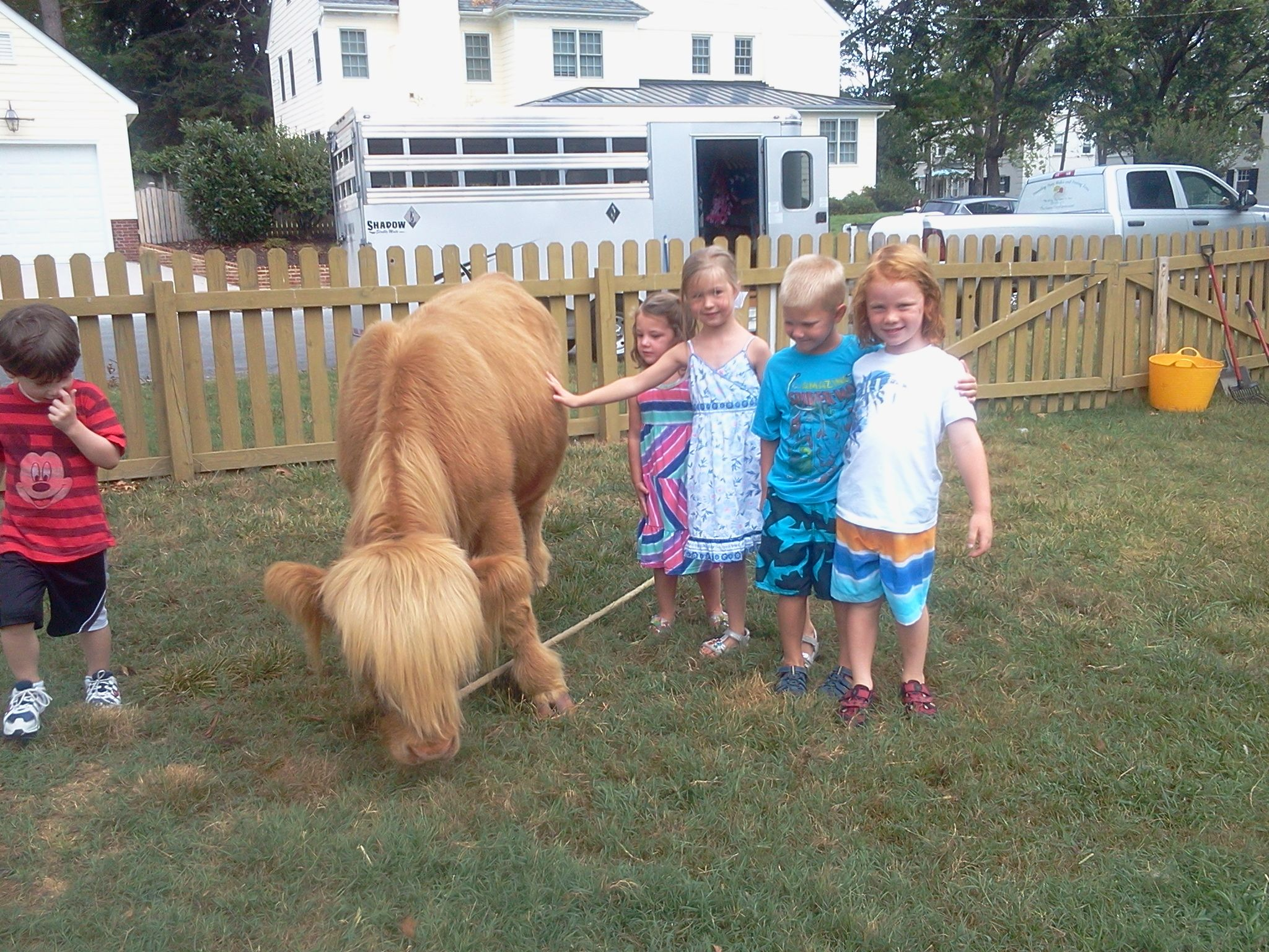 48++ Traveling petting zoo for birthday parties near me ideas in 2021