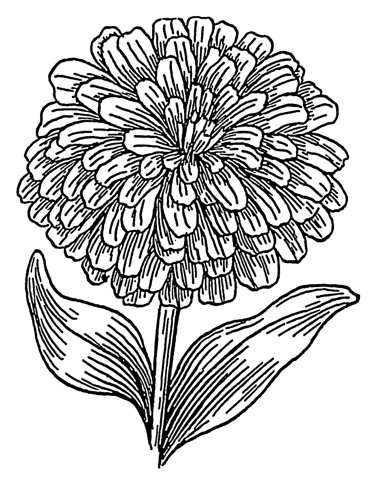 Marigolds outline Tattoos Zinnias Flower coloring