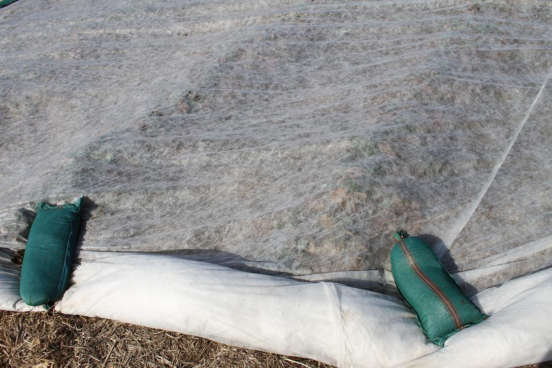Abdeckvlies 19g M Das Vlies Wird Zum Abdecken Von Pflanzen Direkt Am Boden Verwendet Um Diese Insbesondere Nachts V Abdecken Pflegeleichter Garten Pflanzen