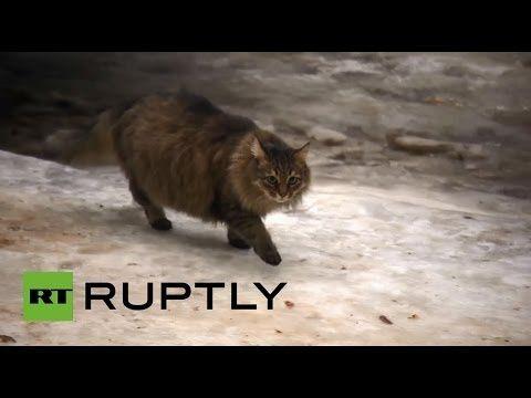 La storia incredibile di Masha, la gatta russa che ha salvato un neonato dal freddo glaciale - Guardalo