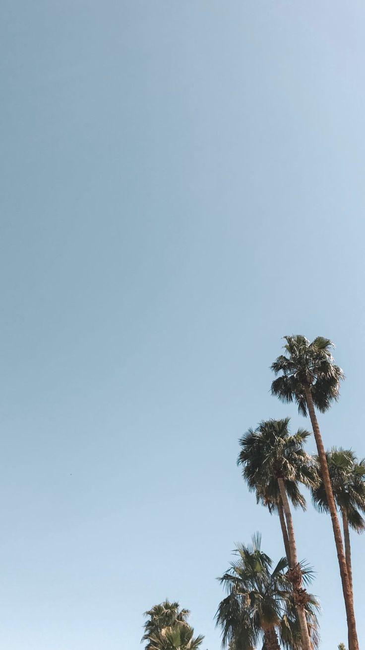 Sky Tree Palm Tree Vegetation Blue Daytime Palm Trees Wallpaper Tree Wallpaper Summer Wallpaper Wallpaper palm trees on blue sky