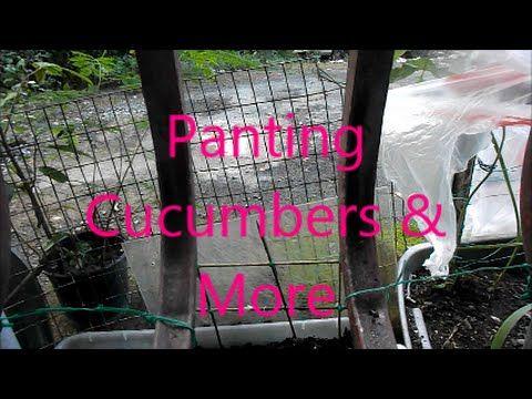 Panting Cucumbers & More