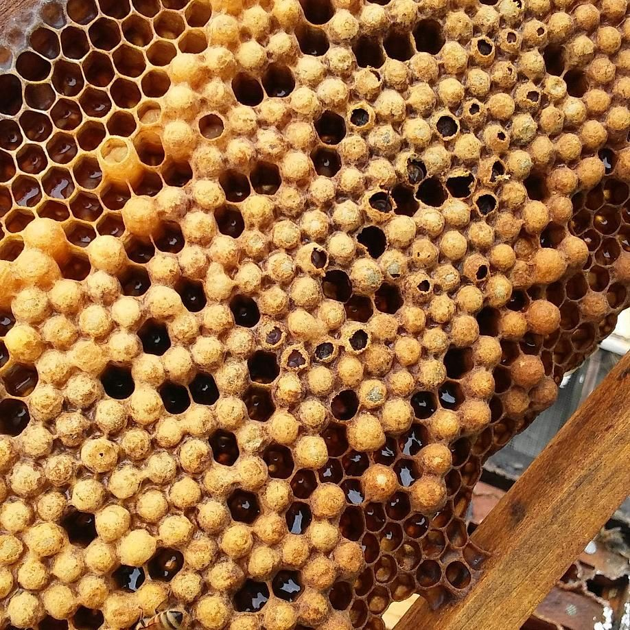 beekeeping lessons near me
