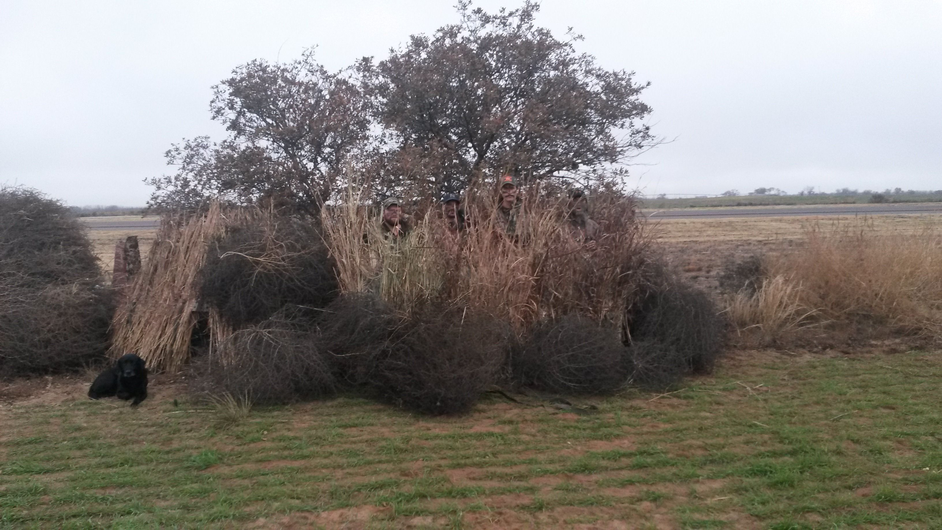 A good edge hide using the Avian X A Frame blind | Duck Club of ...