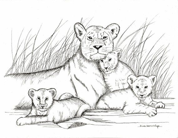 d037ccef1 Mother and Baby Lions Drawing Print | Products | Lion drawing ...