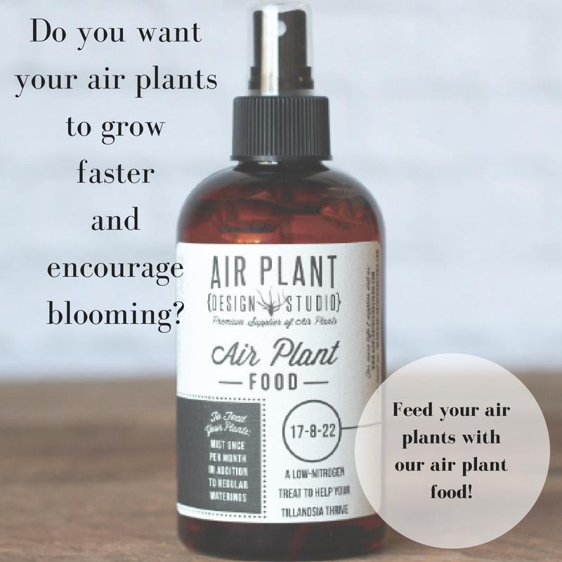 Air Plant Fertilizer 8oz Air plants, Fertilizer for