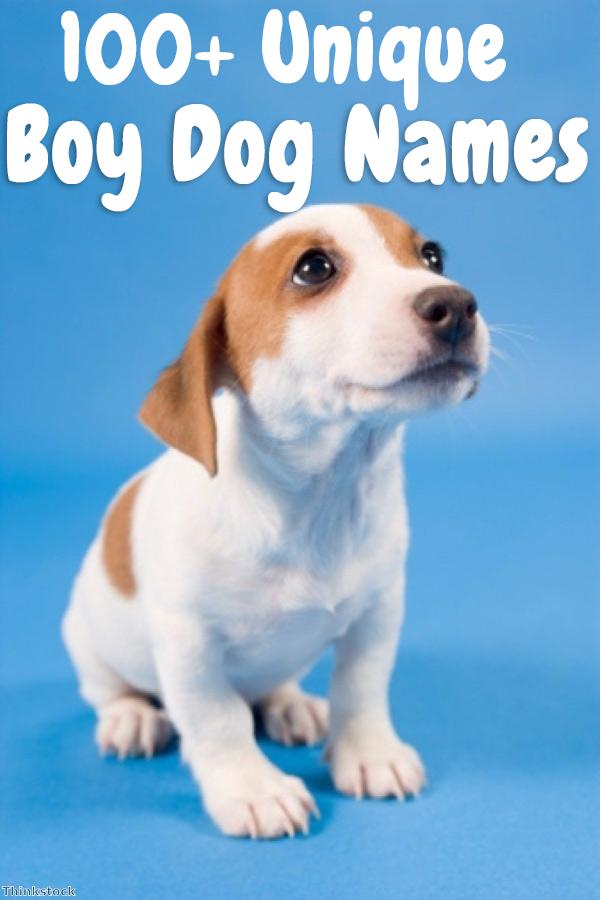 Top 100 Boy Dog Names In 2020 Dog Names Boy Dog Names Best Dog Names