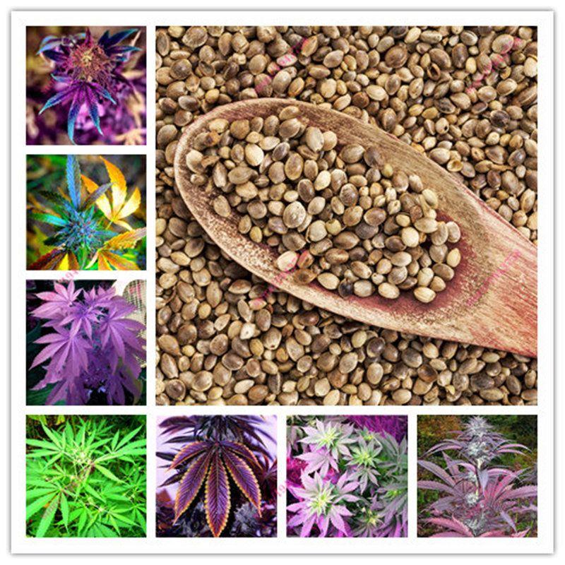 Семена конопли алиэкспрес марихуана садоводы