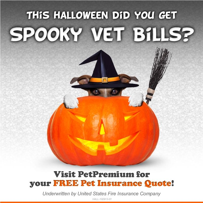 SHARE & Like this Spooky #Puppy ! Is your pet insured? We ...