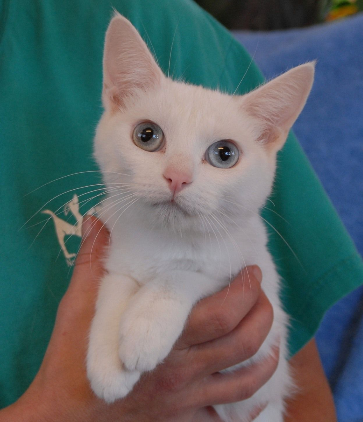 Powder Puff is a petite, delightful girl now ready for
