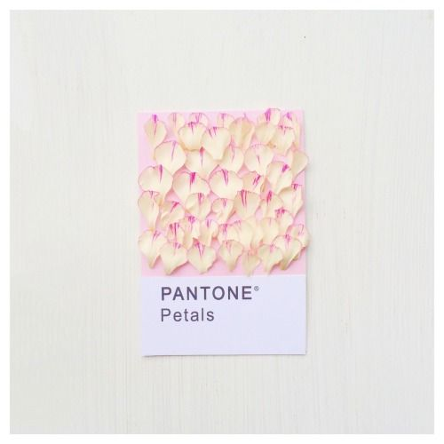 Pantone Petals. Photography and Concept by Maria Marie @cestmaria