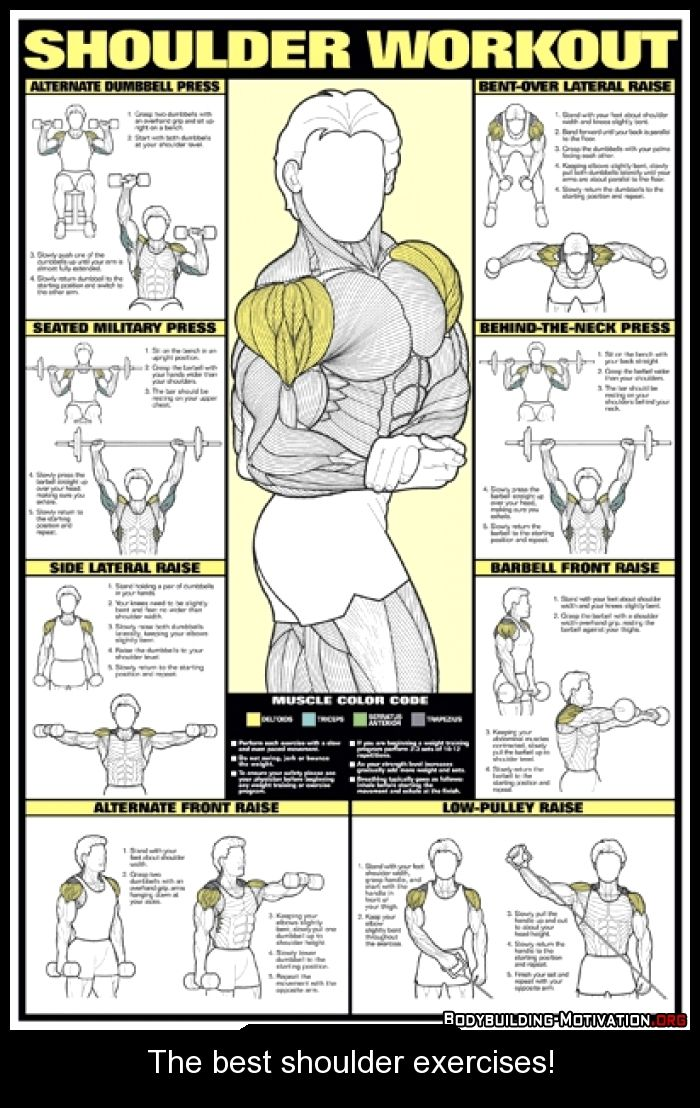 Bodybuilding Supplements Exercises Streches Posture Weight