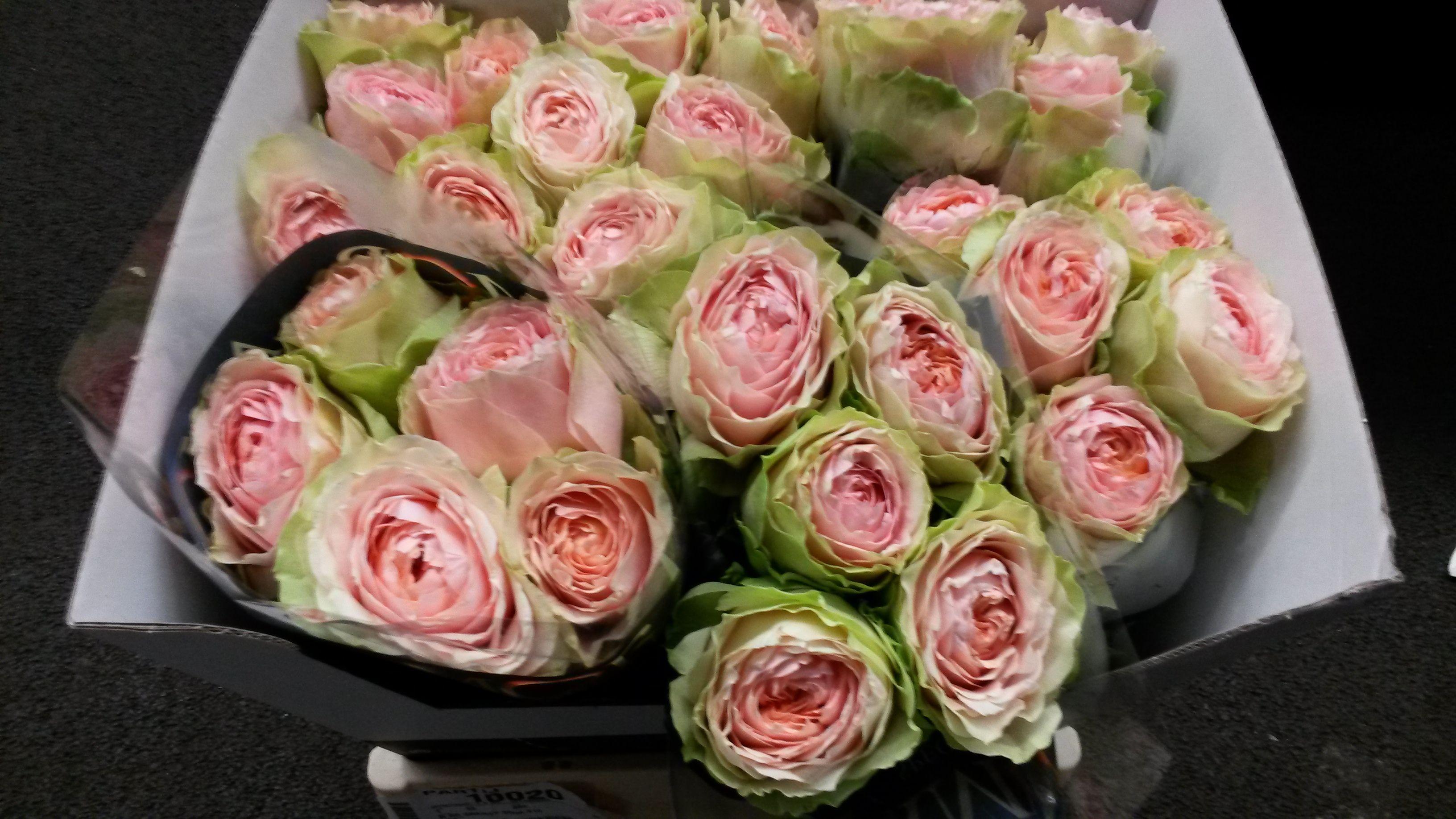 #Rose #Rosa #Gravity; Available at www.barendsen.nl