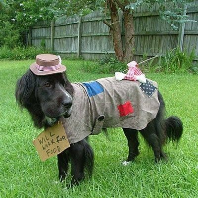 33 pets halloween costumes to flaunt unique halloween style for dogs and cats