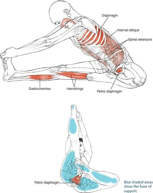 Yoga anatomy | Músculos en el yoga | Pinterest | Pilates, Anatomía y ...