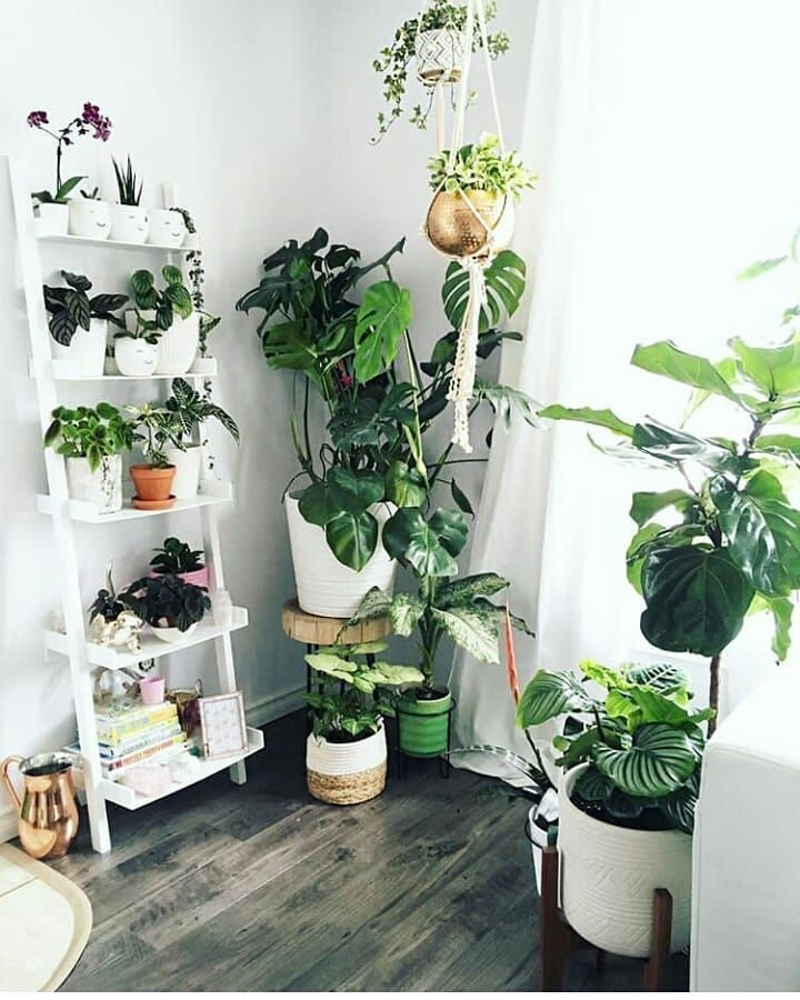 HERE ARE THE 59 BEST INDOOR PLANT IDEAS FOR 2020 - Page 46 of 58 - coloredbikinis. com#coloredbikinis #ideas #indoor #page #plant
