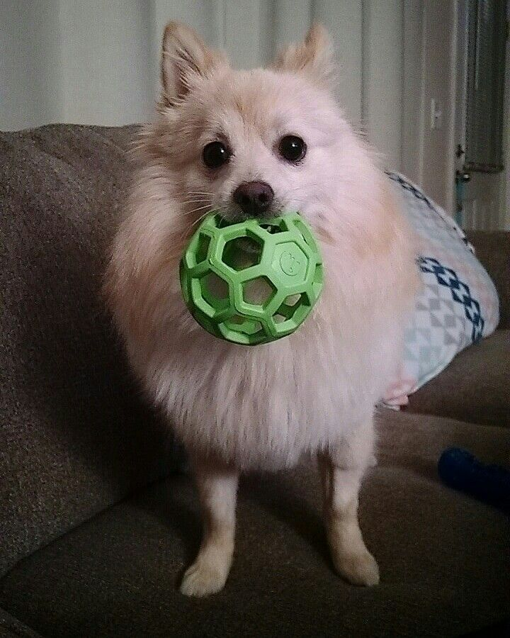 Have favorite ball to toss around in the field! Petsmart