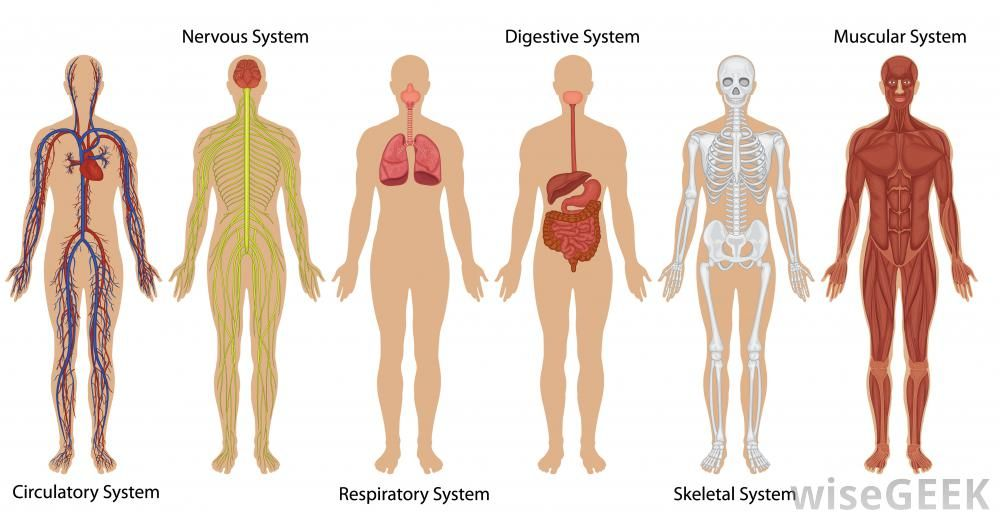 The Human Body Systems seemed so dreary then. Description from ...