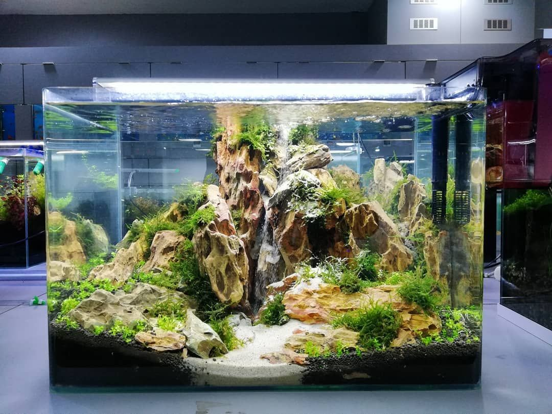 Beautiful Aquascape Freshwater Tank Fresh Water Fish Tank Fish Tank Themes Aquascape Design