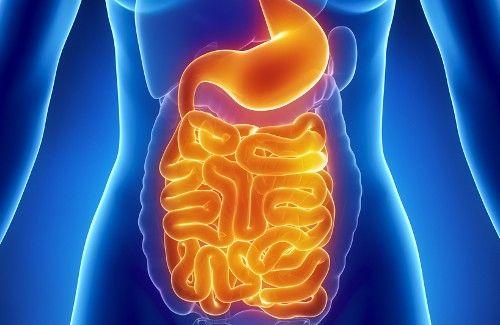 Qué Podemos Comer Para Recuperar La Flora Intestinal Mejor Con Salud Como Limpiar El Intestino Salud Intestinal Limpieza De Colon