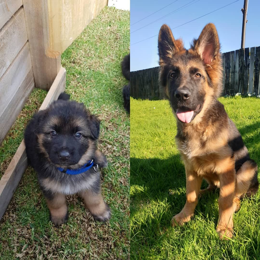 Transformationtuesday From 5weeks To 20weeks This Is How Much