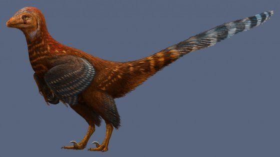 è il Jianianhualong tengi, un piccolo dinosauro scoperto da ricercatori cinesi e canadesi. Non era probabilmente capace di volare, ma possedeva