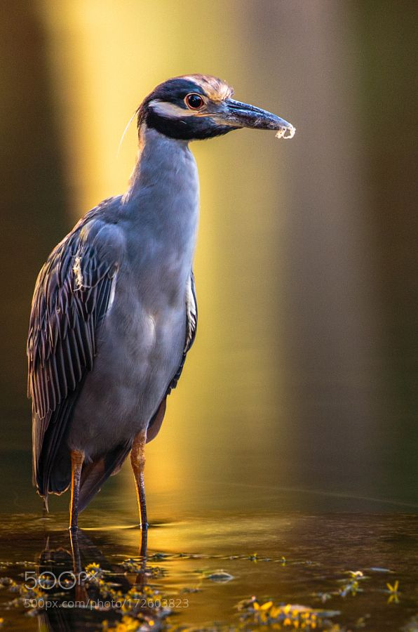 Bird in the San Marcos by PMLewis via http://ift.tt/2cI718o