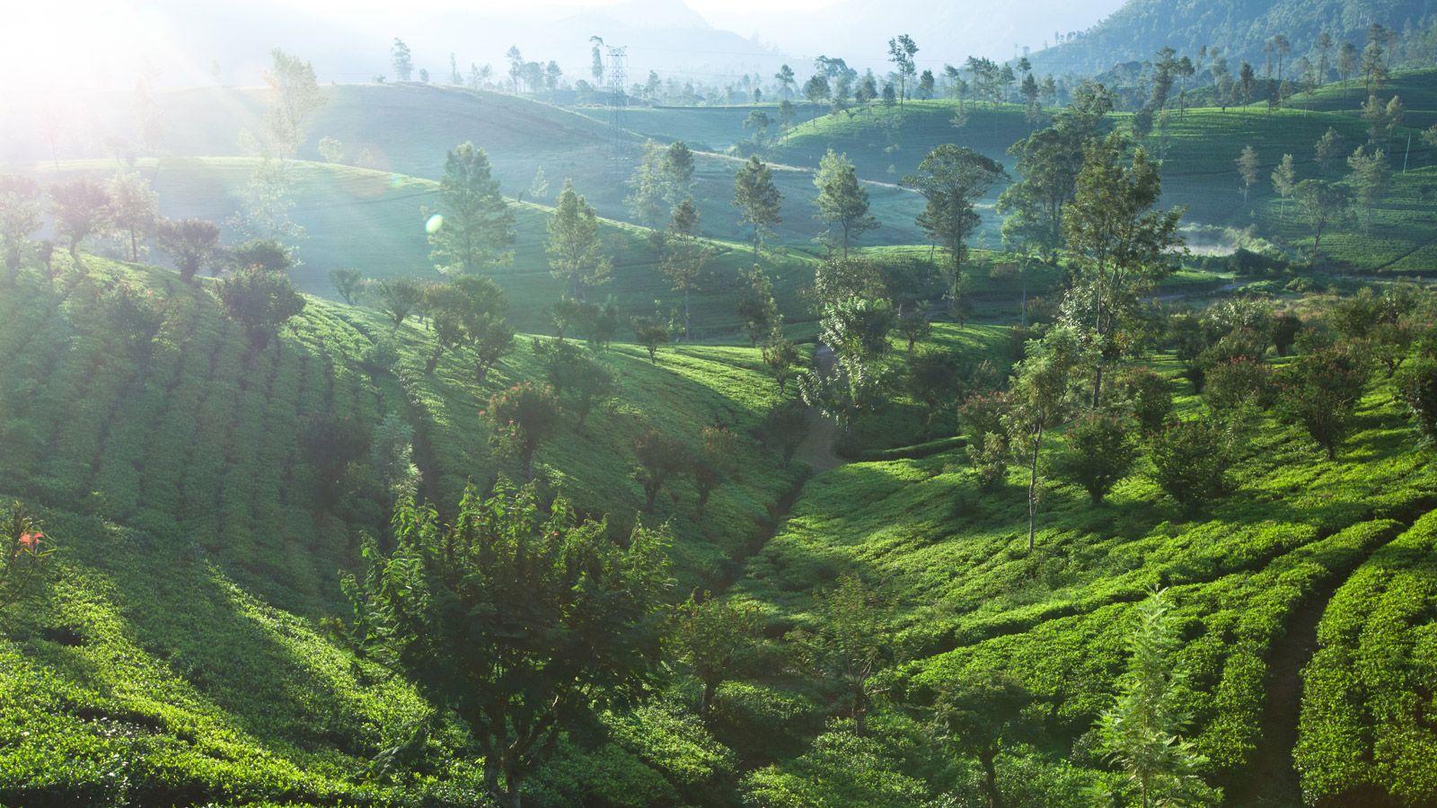 Morning At Norton Bridge Sri Lanka Sri Lanka Paradise