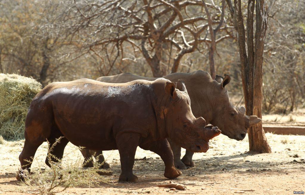 New Study Profiles Rhino Horn Buyers