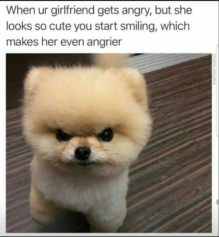 Angry Dog Girlfriend S Angry Face Funny Animal Pinterest