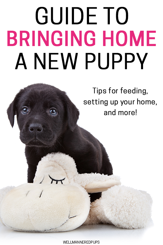 Bringing Puppy Home Guide Puppies Training Your Dog Puppy Care