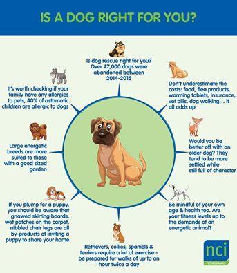 Pin By Nci Insurance On Pet Insurance Vet Bills Pet Insurance Dog Wear