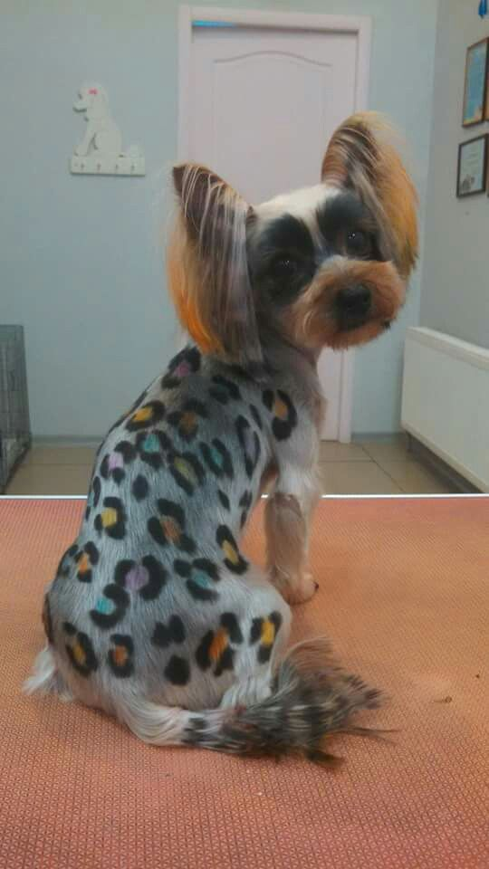 Pin By Shellkates On Face And Body Dog Grooming Styles Dog Grooming Dog Haircuts