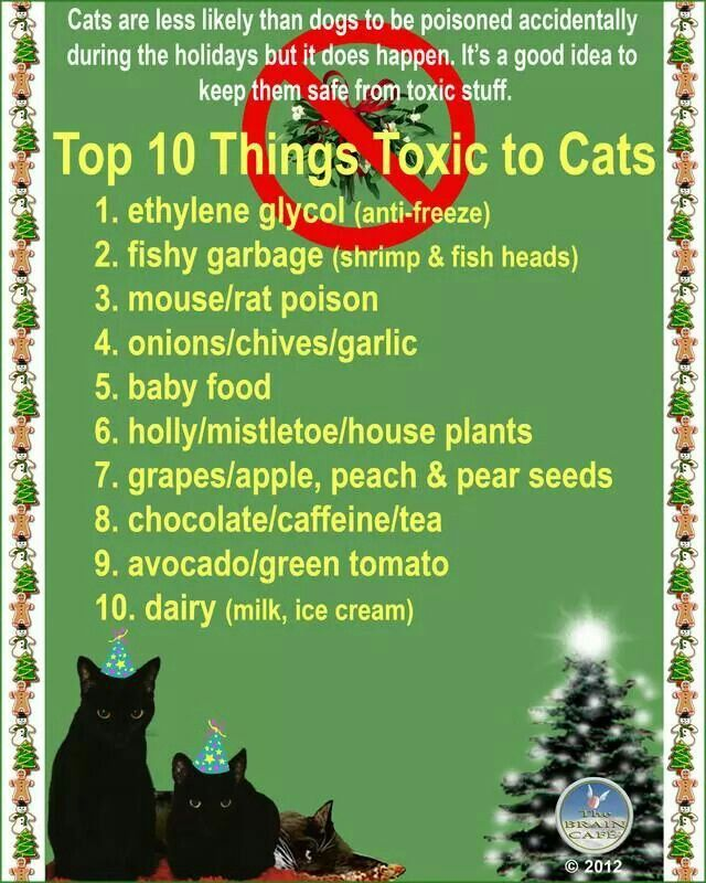 Top 10 Things Toxic To Cats